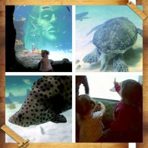 turtle_tank_multi